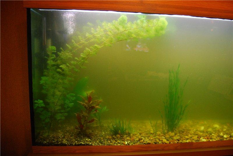 мутная вода в аквариуме что делать 12 Obezyan