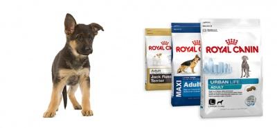 Корм для путешествующих собак Роял Канин
