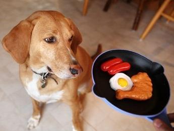 аллергия у собаки на пищу
